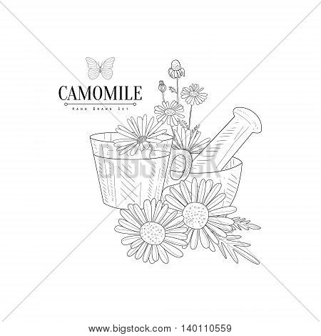 Camomile Tea, Pestle And Mortar Hand Drawn Realistic Detailed Sketch In Classy Simple Pencil Style On White Background