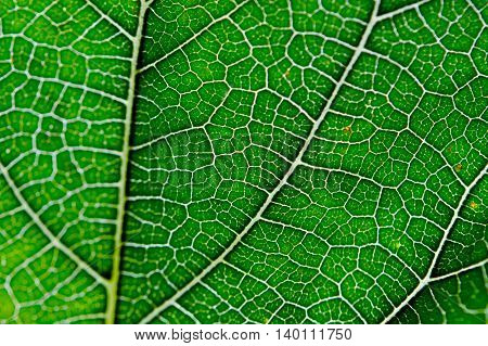 Leaf abstract background texture with vein detail