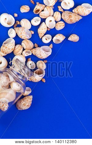 Marine seashells spill out of the bottle glass on the blue background. Space for text