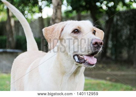 White saliva from white labradog when she is hungry