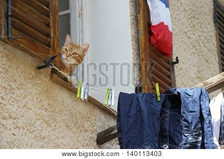 Curious cat in window with laundry hanging in France