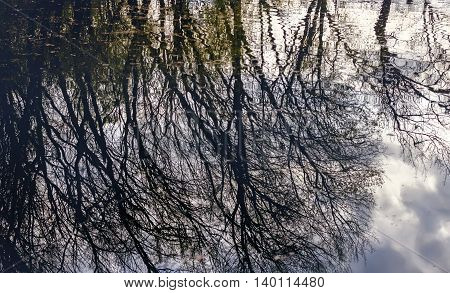 Dark branches of trees reflected in spring water