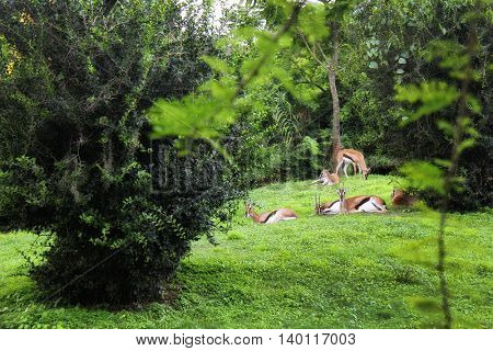 an image of deer in forest