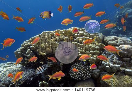 Colorful reef underwater landscape with fishes and corals in the Red Sea. Egypt