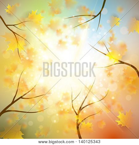Autumn background with gold maple leaves and bokeh lights with sunny sky, fall vector illustration