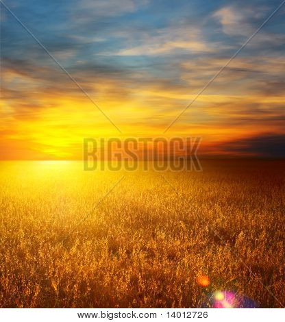 Sunset over field with wheat