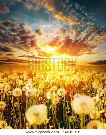 Dramatic sunset clouds over meadow with dandelions