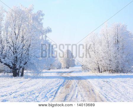 Winter road near frozen trees