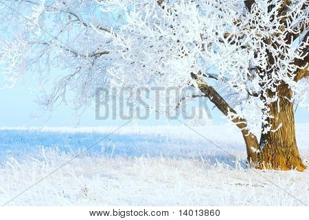Tree with frozen branches