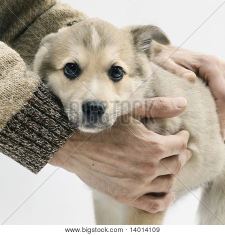Little dog and strong hands