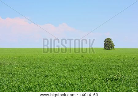 Meadow with green grass and alone tree under sky with pink clouds