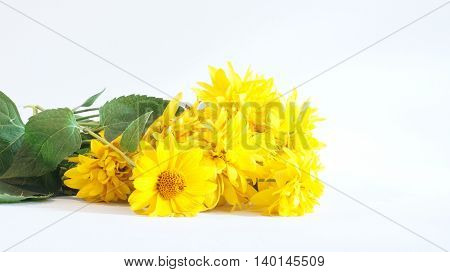 Yellow flowers lie on a white background