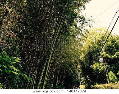 Arashimaya Bamboo Grove in Arashimaya, Kyoto, Japan
