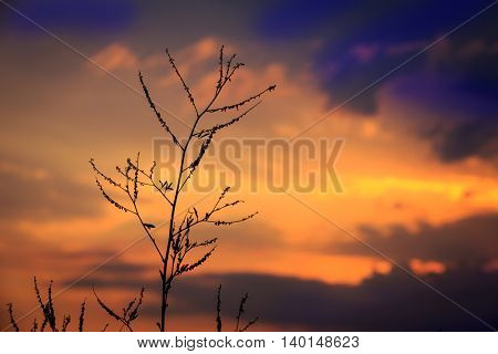 evening landscape with twig on sunset sky background
