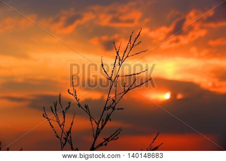 Abstract dry grass on red sunset sky background
