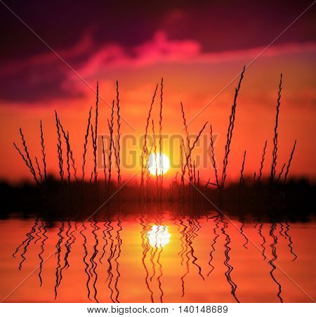 water reflection with grass on sunset sky background