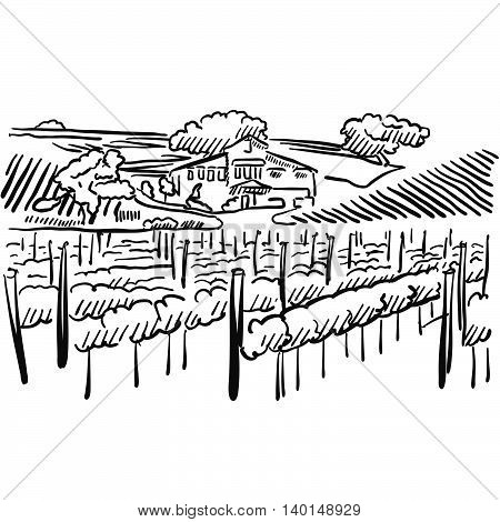 Californian Vineyard With Hills And House