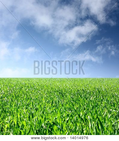 Meadow with green grass under blue sky with clouds