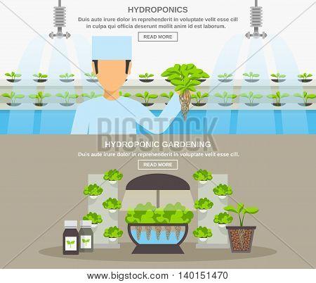Color flat horizontal banner depicting hydroponic system gardening vector illustration