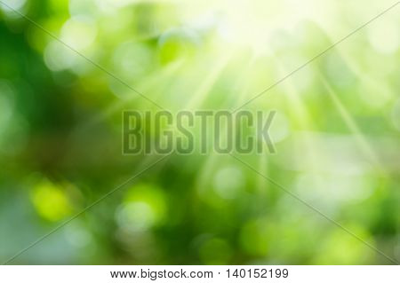 Green nature blurred background and sunlight beam