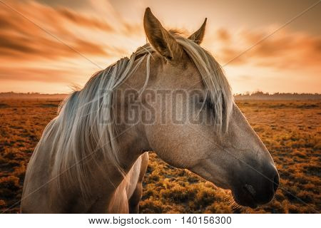 Profile of a horse, close-up, with sunset in the background.