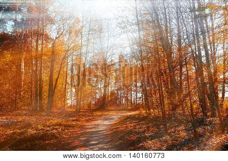Forest sunny autumn landscape -row of autumn yellowed trees under autumn sunlight. Autumn red trees in the forest in sunny autumn weather colorful landscape sunny autumn nature. Soft focus applied