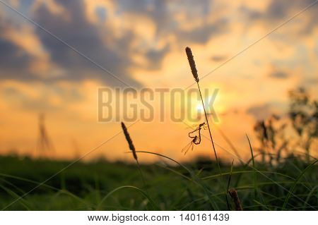 dragonflies on a background sunrise. two dragonflies making love and created a heart shape. the concept of love. soft focus. empty space for your text