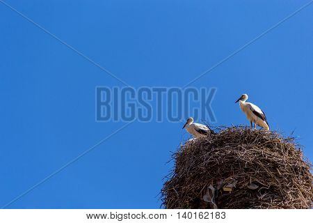 pair of storks on nest against blue sky background