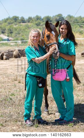 Veterinary with horses on the farm doing work of healing
