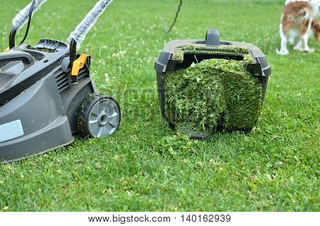 Container of lawn mower filled up with cut grass