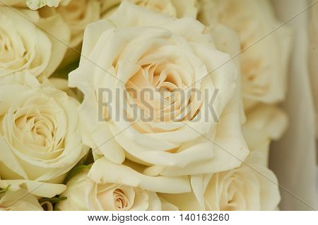 rose creamy texture . Close, close-up, a whole bunch of top