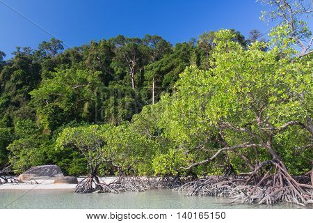 Mangrove on the shore and blue sky