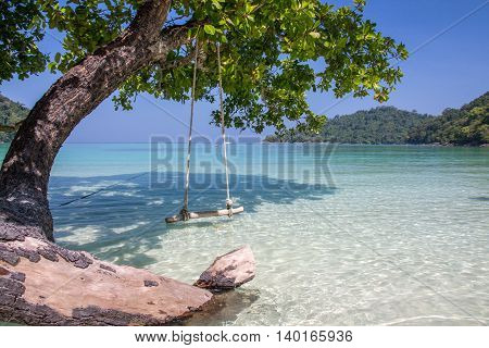 Swing and tree beside the shore with clear blue sky
