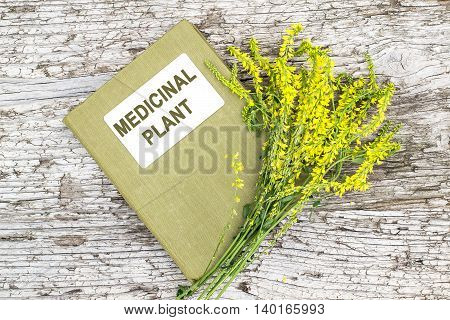 Melilotus officinalis known as yellow sweet clover yellow melilot ribbed melilot common melilot and herbalist handbook on old wooden table. Used in herbal medicine as well as pasture or livestock feed is a major source of nectar