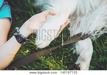 Friendship between human and animal dog give woman paw handshake. Hipster girl and her pet - Best friend forever. Concept relations.