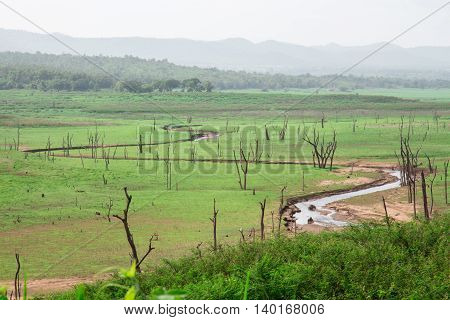 Curve river with the green grass field and sky