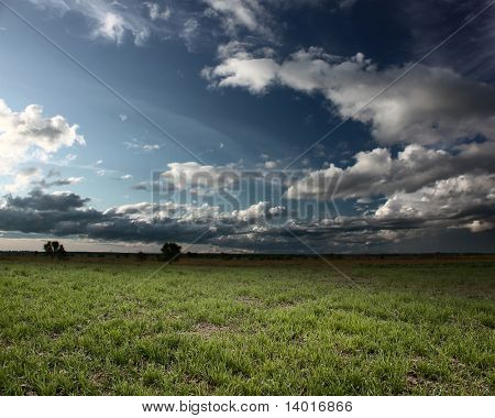 Meadow with grass and fluffy storm clouds