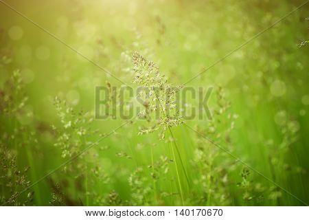 Green grass meadow suitable for backgrounds or wallpapers, natural seasonal sunny landscape
