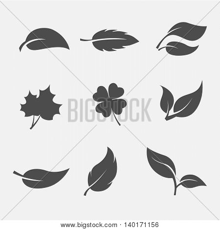set of images of the leaves of trees and plants