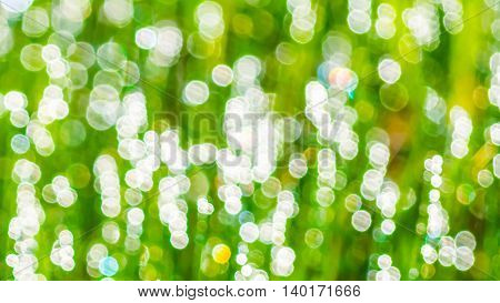 Light green bokeh defocused background. Green bokeh blurred texture.
