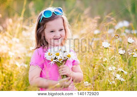 Child picking wild daisy flowers in field. Kids play in a meadow and pick flower bouquet on summer day. Toddler girl outdoors in spring.