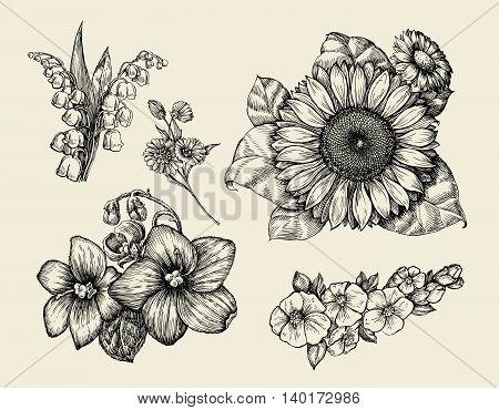 Flowers. Hand-drawn sketch flower, sunflower, white lily, violet Vector illustration