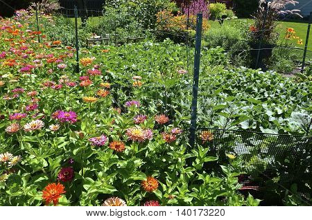 A beautiful garden of flowering zinnias and vegetables is also surrounded by a wire fence to keep deer from entering.