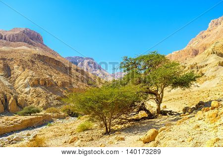 The gorge in Ein Gedi Nature Reserve with the green trees next to the mountain river Israel.