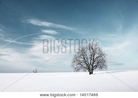 Frozen tree and blue sky with clouds