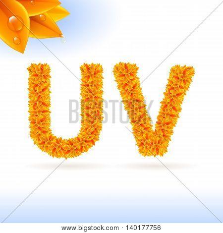 Sans serif font with orange leaf decoration on white background. U and V letters