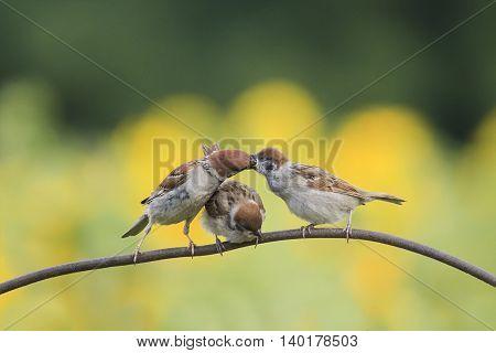 a bird a Sparrow feeding Chicks on the iron fence