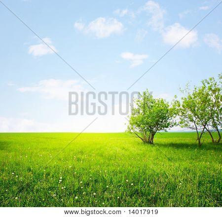 Wiese mit grünem Gras und Bäumen und Sonnenlicht