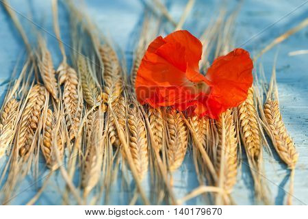 bright background with ears of wheat and red poppy flower on blue table