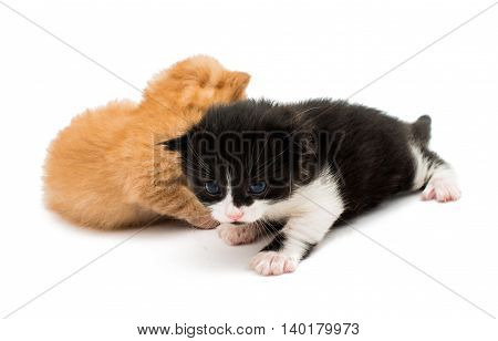 small stay  little kittens on white background